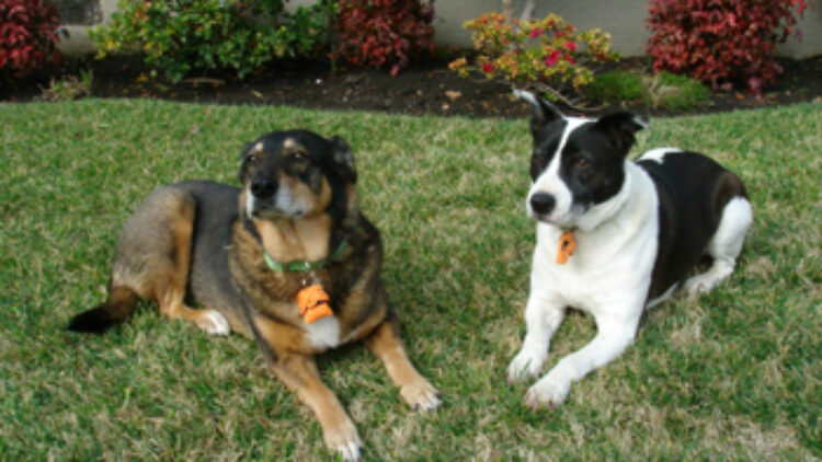 What are Pet Trusts?
